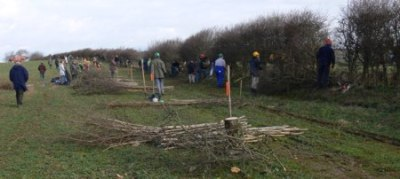 About to start the hedgelaying competition