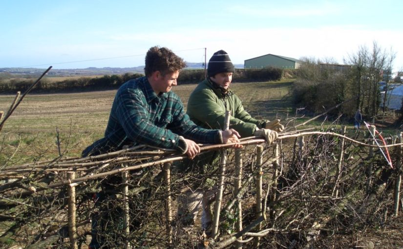 Pleacher comforts: the Isle of Wight Hedgelaying Competition
