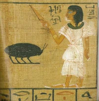 Menacing beetle