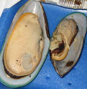 Nibbled mussels