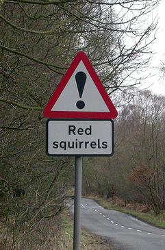 Red squirrel roadsign