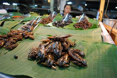 Fried Giant Water Bug Lethocerus indicus - Chiang Mai Night Bazaar © avlxyz