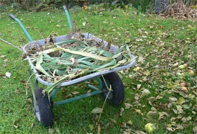 Wheelbarrow in the wildlife garden