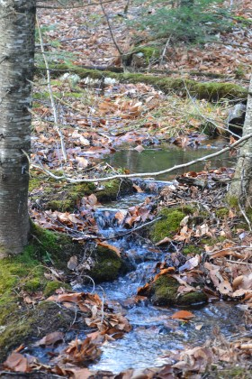 Tributary near parking lot