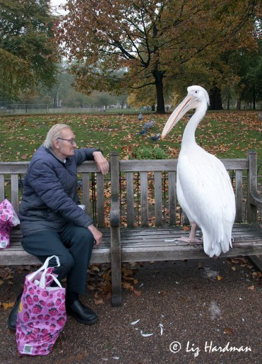 """Well how about sharing your lunch?"" Asks the Pelican. ""Not today,"" says the man."