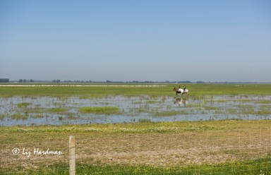Park rangers on horseback and flocks of flamingoes.