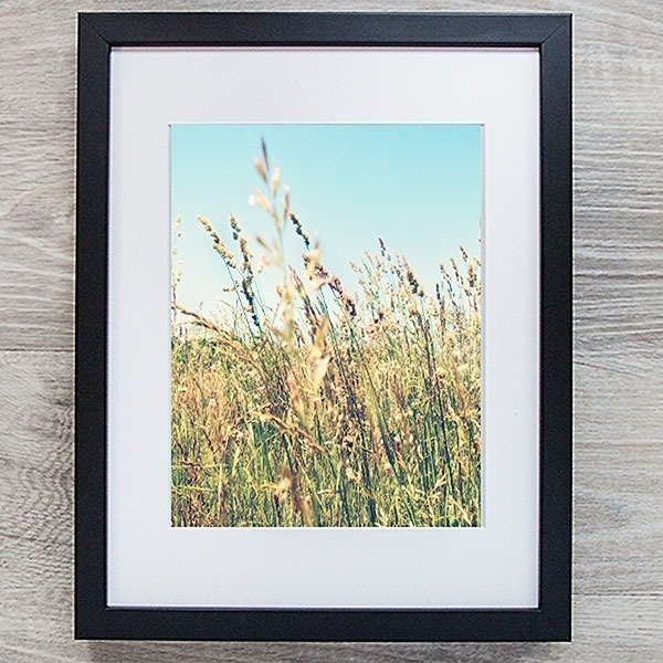 tall grass in summer field photo with black frame amsw photography