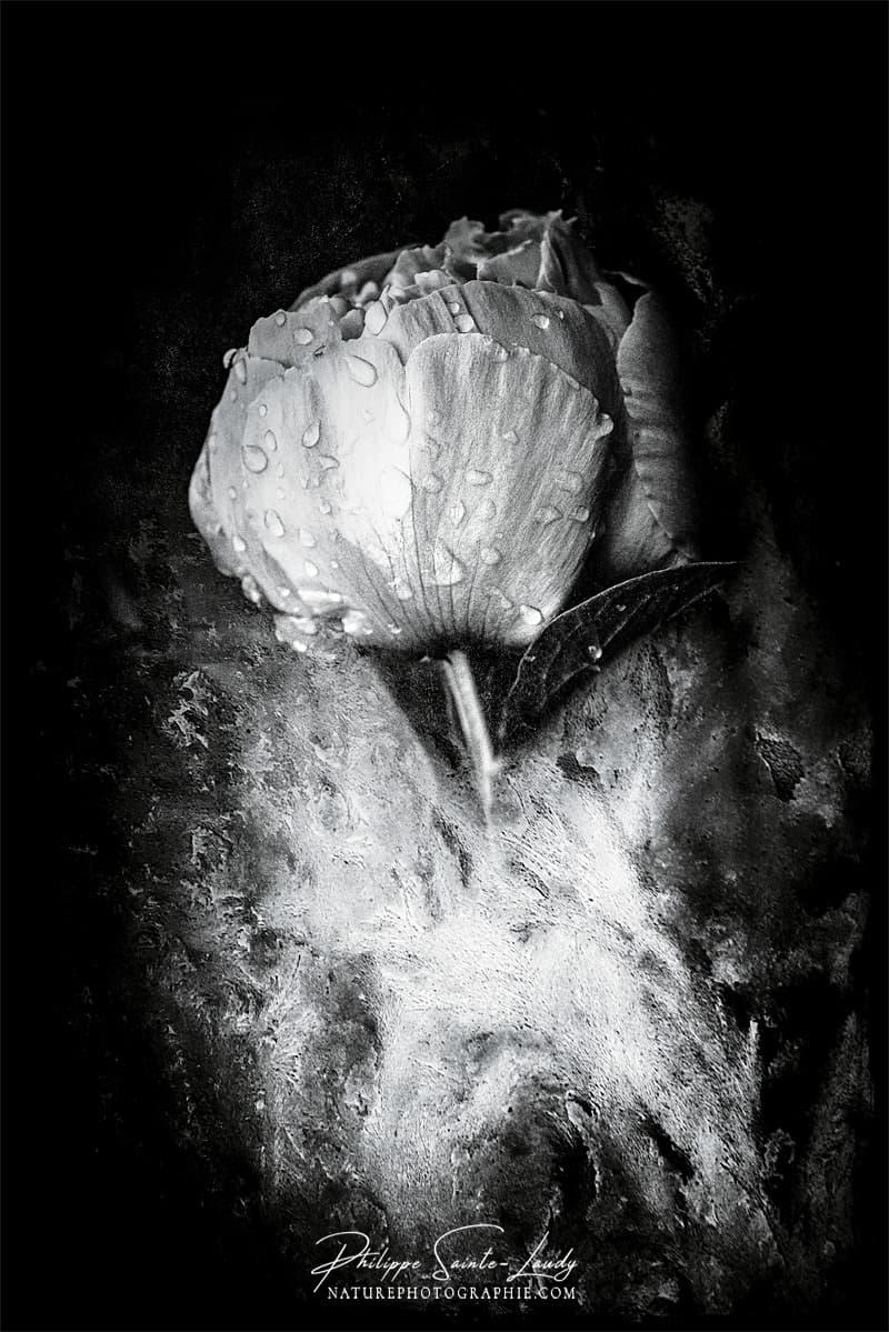 Photographie Noir Et Blanc : photographie, blanc, Photos, Blanc., Galerie, Photo, Nature, Photographie