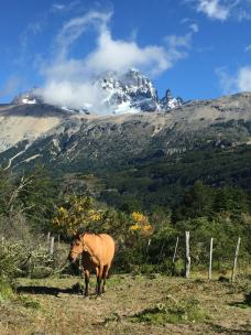The horse and the mountain