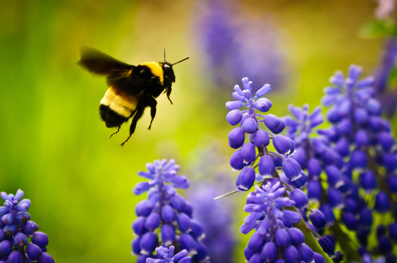How To Create A Bee Friendly Garden Nature Ridge Homes