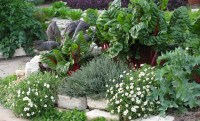 Eat Your Yard! How to Design an Edible Landscape. - Nature ...
