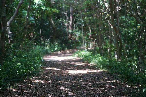 こもれびの森を進む