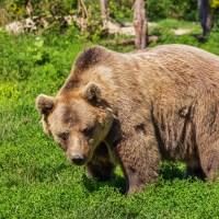 キャンプやハイキング時のクマ対策、考えたことありますか?