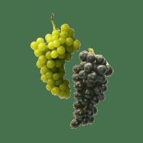 organicc-grapes.png
