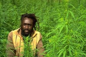 marijuana laws in jamaica