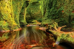 Must-see picturesque spots in a half-day trip from Glasgow: Finnich Glen (Devil's Pulpit) and the lone tree at Milarrochy Bay