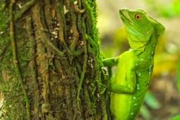 Jungle adventure at Los Guatuzos Wildlife Refuge in Nicaragua