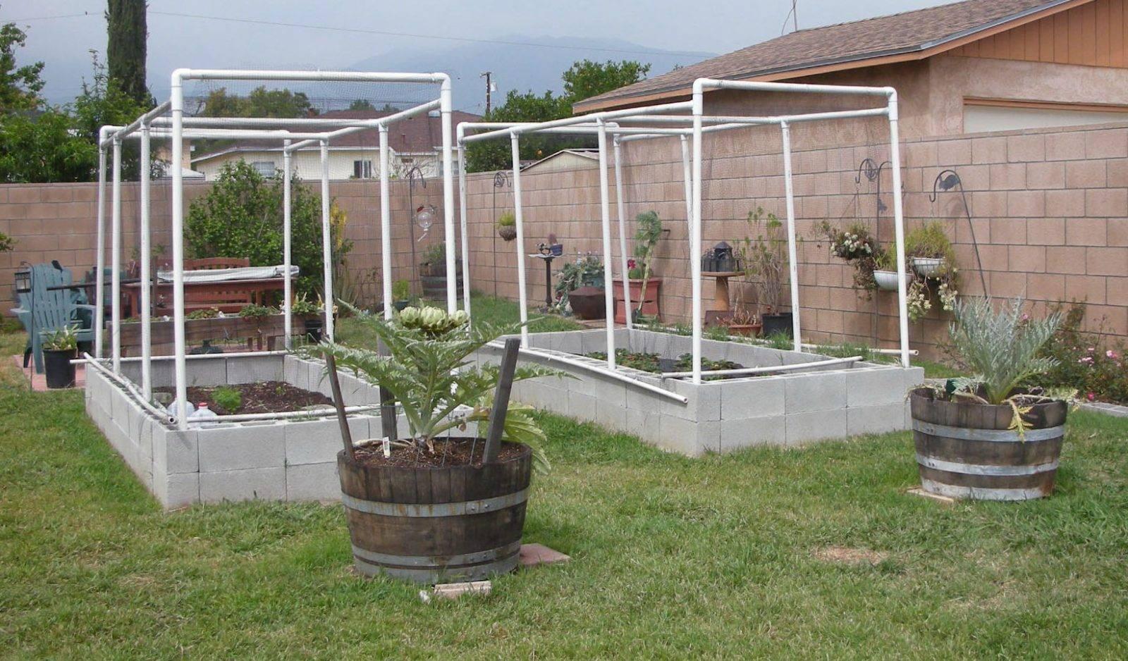 garden growing experiments