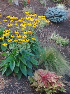 drought-resistant-landscaping