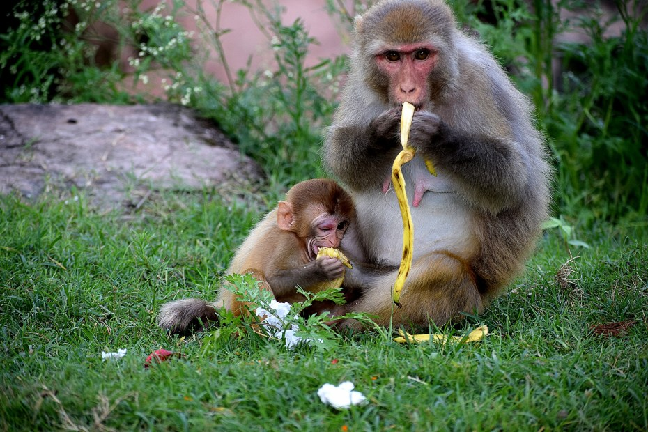 humans and monkeys
