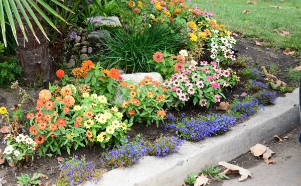 xeriscaping naturesurrounds