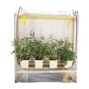 לגידול עגבניות בבאטו באקטס
