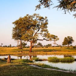 Hwange Landscape 2