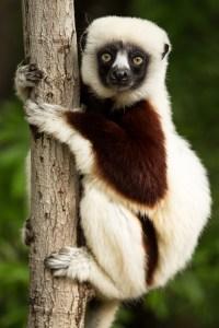 Scuba in Madagascar