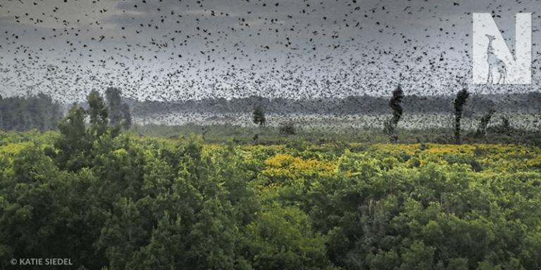 ZAMBIA-HEADER-BATS.png
