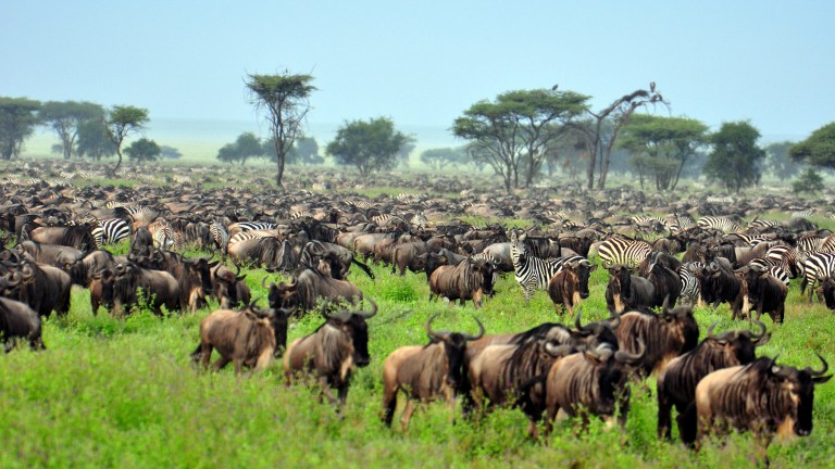 Visit Serengeti with Nature Travel Africa