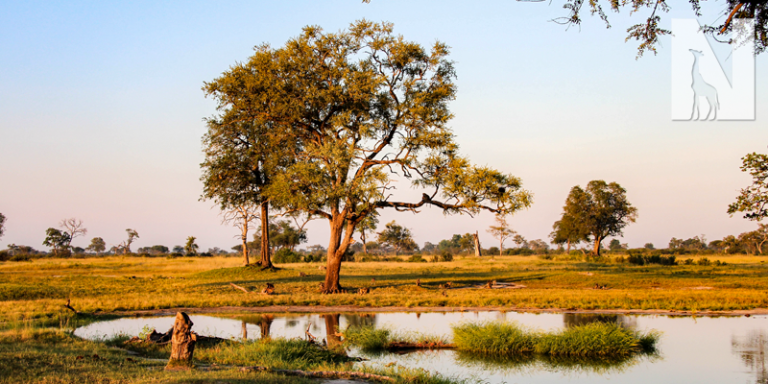Visit Zimbabwe with Nature Travel Africa
