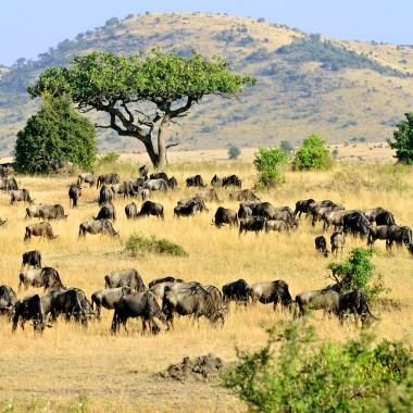 Serengeti (4)