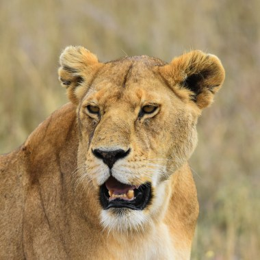 Serengeti (5)