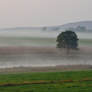 Landscape with morning mist