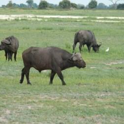 Chobe NP, Botswana (9)