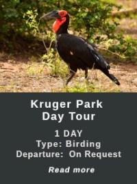 Kruger-park-Day-Tour