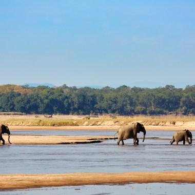 malawi and zambia wildlife
