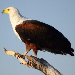 Chobe-NP,-Botswana-(11)