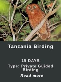 Tanzania-Birding