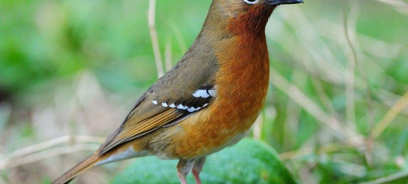Special Kenya Birding Tour