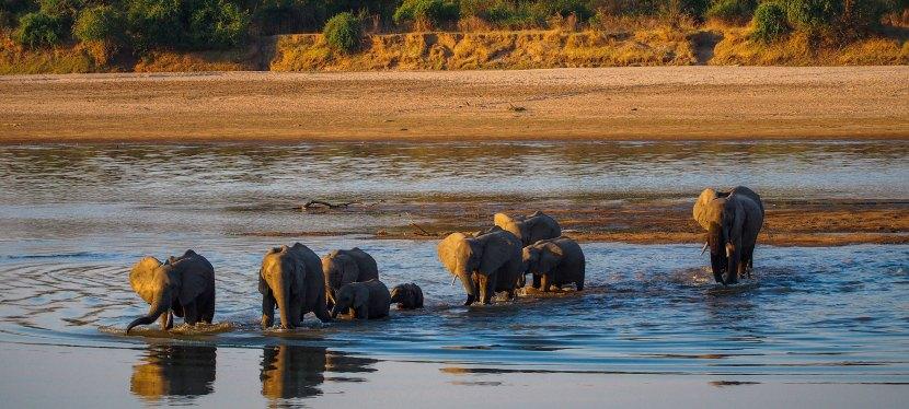 Best of Zambia Wildlife
