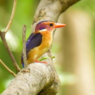 Kenya Birding Special