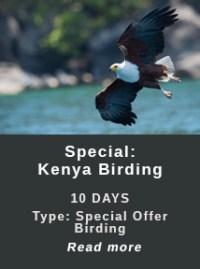Kenya-Birding-Special