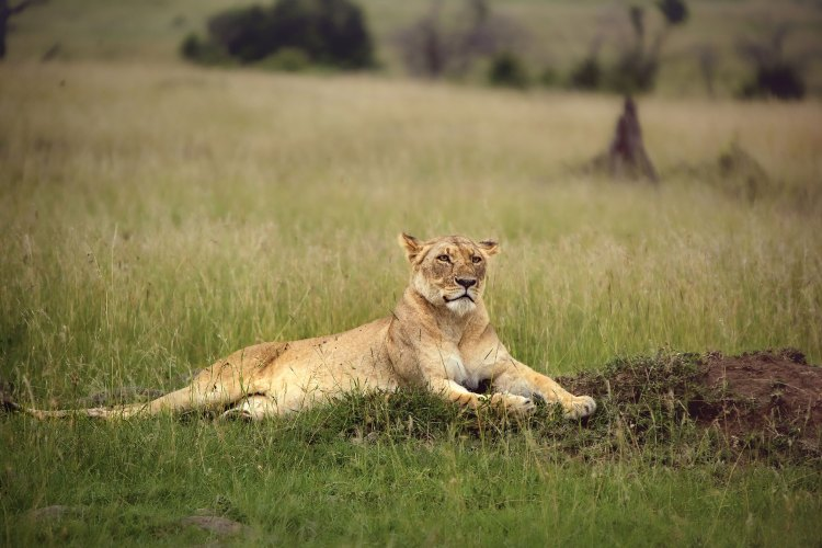 Special Kenya Wildlife Safari