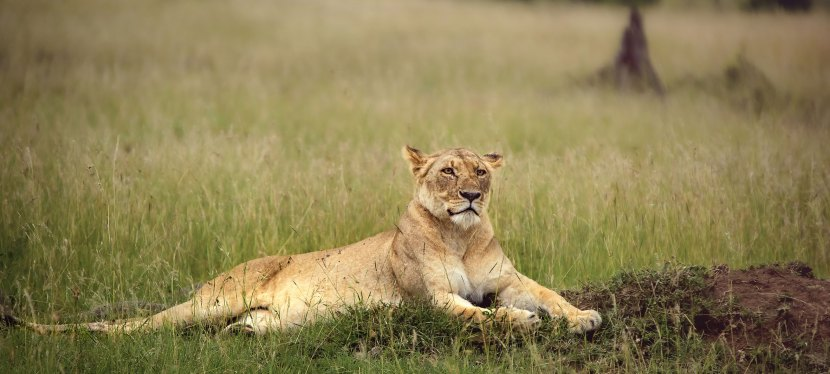 Kenya Wildlife Safari (Special)