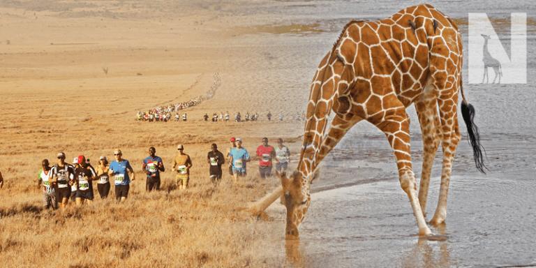 Lewa Marathon & Kenya Safari