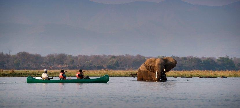 Hwange & Mana Pools Walking and Canoe Safari
