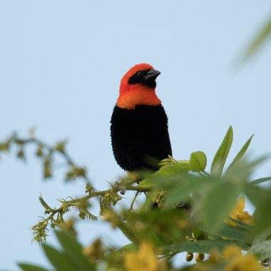 birding in Zimbabwe
