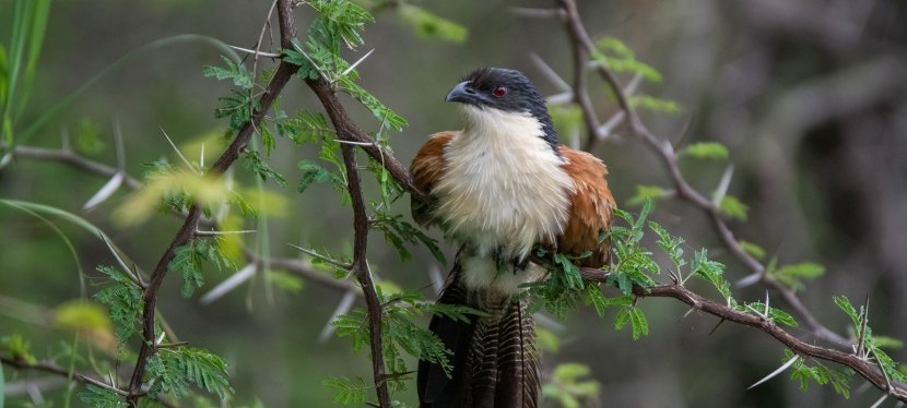 Zimbabwe Birding Tour