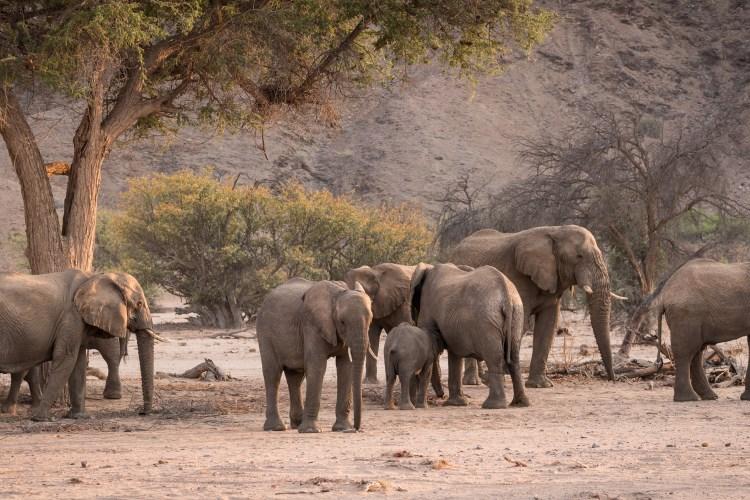 African Safaris and Tours